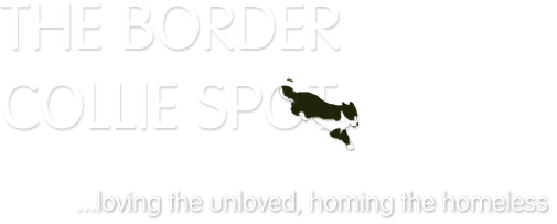 The Border Collie Spot